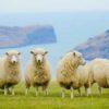 ニュージーランド|修学旅行
